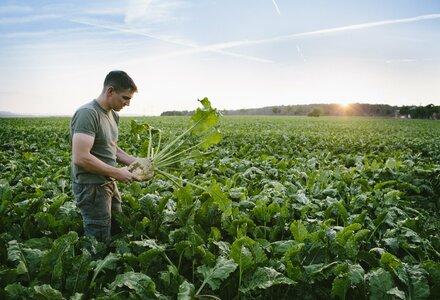Pesticide analyses